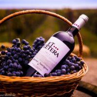 Тур в Молдову из Одессы на выходные. Et Cetera винодельня. Активтравел
