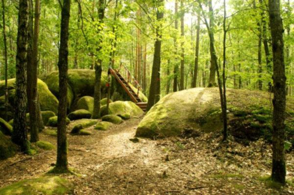 Трикратский лес (высажен графом Скаржинским). Туры выходного дня.