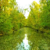 Трикратсикй лес. Тур из Одессы на выходные.