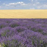 Лавандовые поля. Туры в Молдову из Одессы